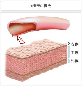血管内皮機能 | 循環器領域 | 臨...